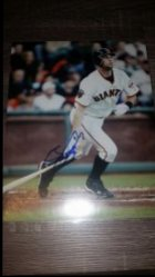 Brandon Belt 8x10 Photo IP Autograph